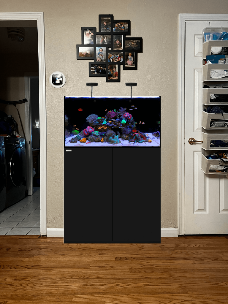 A rendering of a hallway space with a 50 gallon fish tank in it