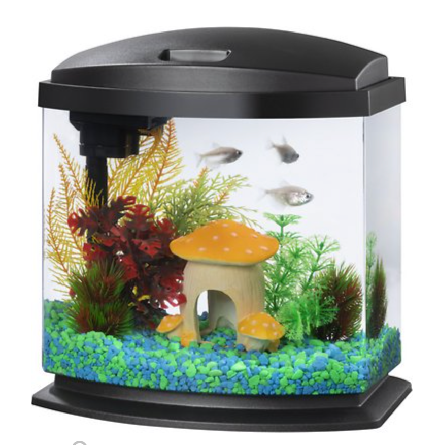 A stock photo of a smaller fish tank with a lid, three fish, some plants and a little mushroom structure for the fish to swim into.