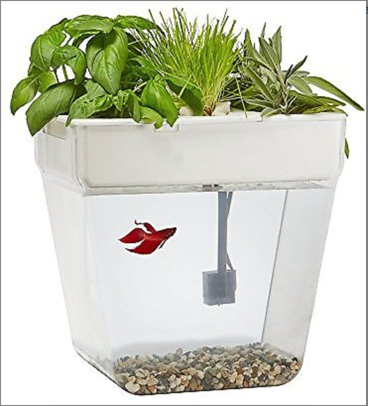 A stock photo of an aquaponic fish tank with plants on top of it and a red fish inside.